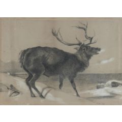 Moose Charcoal Painting by Richard Cockle Lucas 1878 English Signed 19th Century