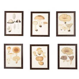 A Charming Set of Six Mushroom Lithographs