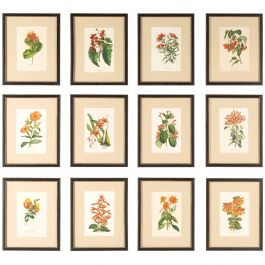 12 Red Van Houtte Flower Chromolithographs