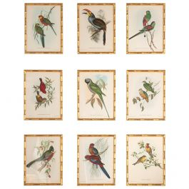 A Fine Set of 9 Exotic Birds