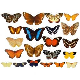 Photo-Realistic Painting of Butterflies by Bridget Orlando