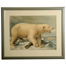 Back to view all Pictures A large print of A polar bear