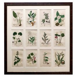 24 Baxter Botanical Prints