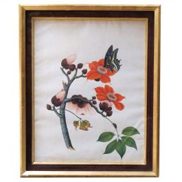Early 19th Century Chinese Botanical Butterfly Watercolor on Pith Paper