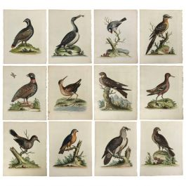 Hand-Coloured 18th Century Ornithological Illustrations