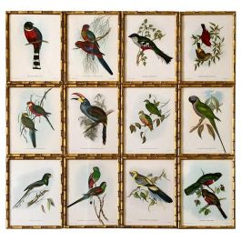 A Set of 12 Exotic Birds