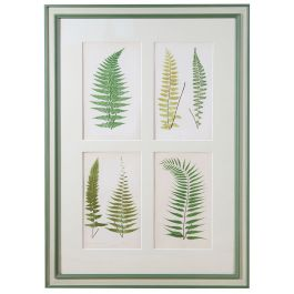 Eight coloured wood engravings of ferns