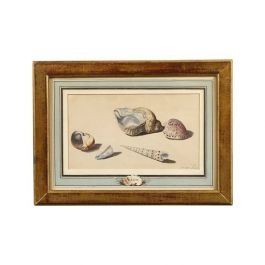 Watercolour on Paper of Sea Shells by Willem Van Leen
