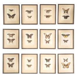 A Set of 12 18th Century Engravings of Butterflies