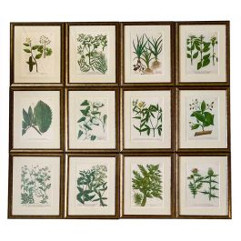 A Set of Twelve Botanical Engravings by Johann Weinmann