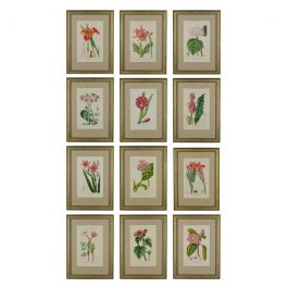 Set of 12 Hand Coloured Engravings