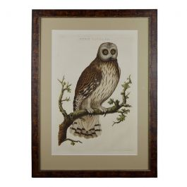 18th Century Nozeman Copperplate Owl Engraving