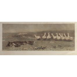 The Fox and the Geese by Briton Riviere 1868 Lithography c1918