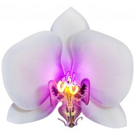 Orchis Exotica Phalaenopsis Violet, Glass & Neon Sculptural Orchid by Laura Hart