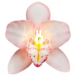Orchis Exotica Cymbidium Baby Pink, a Glass & Neon Orchid artwork by Laura Hart