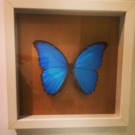 A FRAMED BUTTERFLY